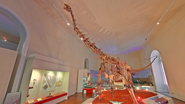 A still from the video showing a dinosaur skeleton in the museum.